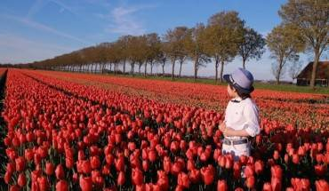 canh-dong-hoa-tulip-dep-nhu-tranh-o-ha-lan-ivivu-10