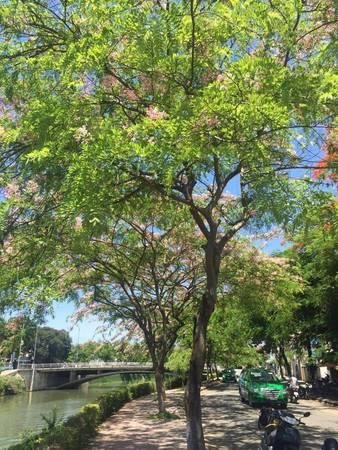 """""""Tuy không phải là lần đầu tiên mình đến Huế, nhưng cảm giác xê dịch đến một vùng đất khác nơi mình đang ở rất thú vị, khung cảnh thơ mộng và hiền hòa như nhiều người vẫn nói về Huế luôn làm mình thích thú"""", Tuấn Anh chia sẻ. Trong hình là một góc đường ở trung tâm thành phố, bình yên với những hàng cây nở hoa."""
