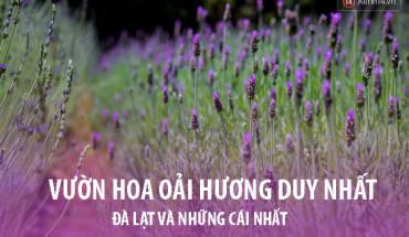 da-lat-noi-ma-ban-chang-the-ngo-co-vo-van-nhung-cai-nhat-ivivu-1