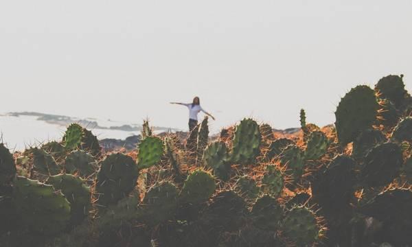 """Một địa điểm khác thuộc Phú Yên mới nổi sau khi bộ phim """"Tôi thấy hoa vàng trên cỏ xanh"""" được công chiếu là Bãi Xép. Bãi Xép sẽ rất đẹp khi lên hình nếu bạn biết lựa góc máy vì """"đặc sản"""" ở đây là những bụi cây xương rồng mọc cheo leo nơi vách núi. Đứng trên bãi Xép nhìn quanh, bạn sẽ thấy một bên là một bãi biển dài, một bên là một vách đá sâu còn một bên là bãi cỏ xanh rì với những đàn bò đang thung thăng gặm cỏ. Chỉ cần một chiếc xe máy, một chiếc ba lô và một ít tiền, hãy đi đến nơi mà bạn muốn để thoát khỏi những lo toan thường ngày. Và cung đường Ninh Thuận - Nha Trang - Phú Yên sẽ là một gợi ý thú vị chờ bạn khám phá."""