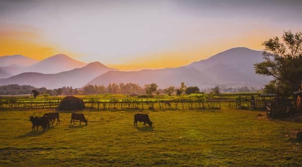 Hoàng hôn ở khu vực giáp ranh giữa Ninh Thuận và Khánh Hòa, trên một cung đường rộng với hai bên là những cánh đồng mênh mông và dãy núi trùng trùng điệp điệp. Tất cả hòa quyện với nhau tạo thành một bức tranh yên bình, trầm mặc đậm chất làng quê Việt Nam.