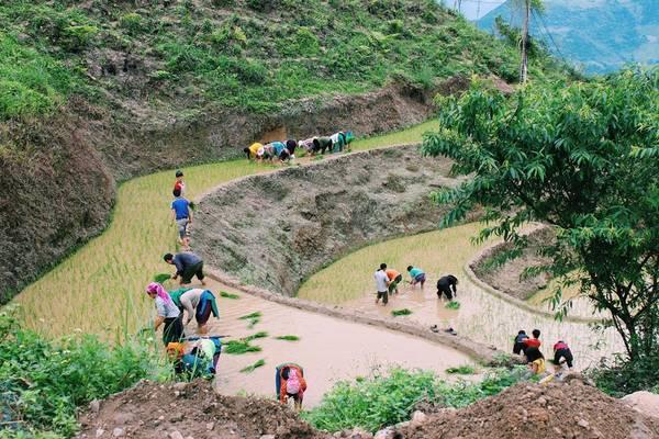 Người nông dân làm việc đồng áng trên những thửa ruộng bậc thang...