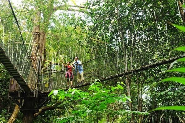 """Công viên Quốc gia Penang với khuôn viên rộng hơn 2.500 ha sẽ làm bạn """"lạc lối"""" trong thế giới xanh ngắt của gần 50 loài chim, thỏa sức tận hưởng không khí mát lành của rừng mưa nhiệt đời."""