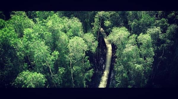 Một con đường len lỏi giữa các tán cây.