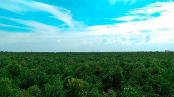 Một vùng xanh bạt ngàn với diện tích rộng khoản 135 ha và vùng đệm rộng 500 ha.