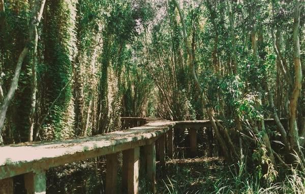 Lối dẫn vào rừng là một con đường làm bằng xi măng, dài là 5km với rất nhiều nhánh rẽ bọc xuyên qua khu rừng.
