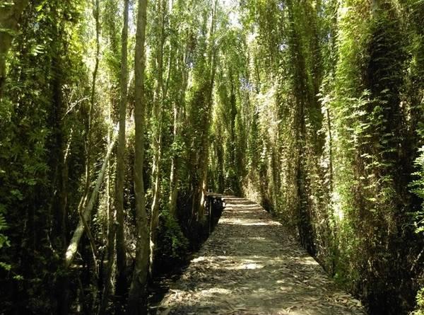 Dọc hai bên đường là những cây tràm cao vút. Ánh sáng len lỏi vào bên trong con đường tạo cho ta một cảm giác như đang lạc vào khu vườn trong truyện cổ tích.