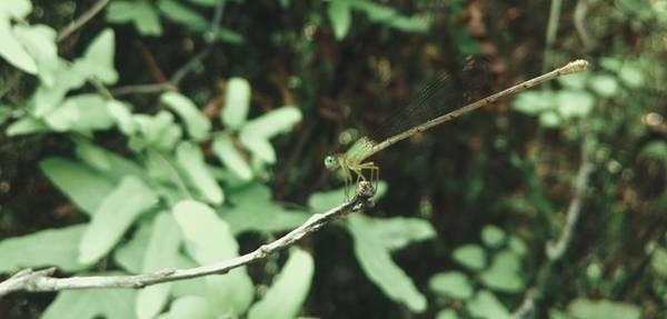 Trên đường đi, bạn cũng dễ dàng bắt gặp được những loài côn trung tuyệt đẹp.