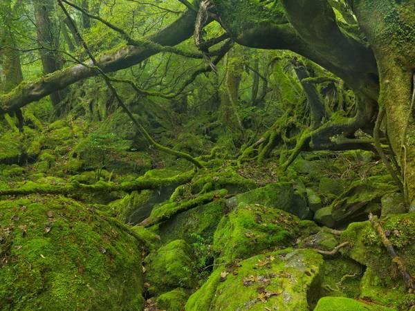 Đảo Yakushima. Ảnh: Shutterstock/Sara Winter
