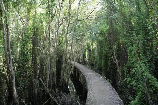 Điểm nhấn chính của làng nổi Tân Lập là cây cầu bằng xi măng dài khoảng 5km được xây dựng xuyên rừng tràm, để du khách có thể tham quan. Ảnh: Kim Lộc