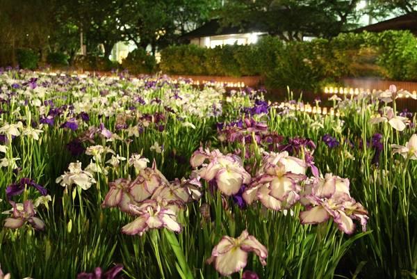 Công viên hoa diên vĩ Suigo-Itako nằm ở số 1-5 Ayame, thành phố Itako, tỉnh Ibaraki, Nhật Bản, cách ga Tokyo 70 phút đi xe bus cao tốc.