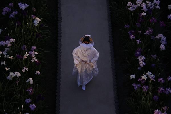 Cô dâu mặc trang phục truyền thống màu trắng đi giữa những khóm hoa diên vĩ.