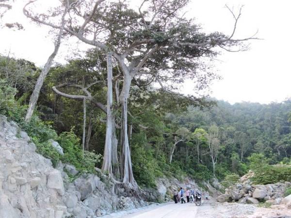 Cây đa di sản có tuổi đời 6 thế kỷ - điểm đến không thể bỏ qua trên hòn Lao - Ảnh: THANH LY