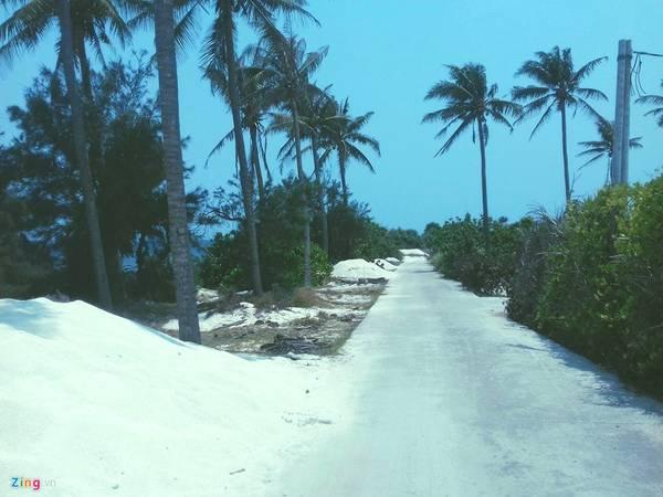 Con đường độc nhất ở đảo Bé với những hàng dừa xanh mát.
