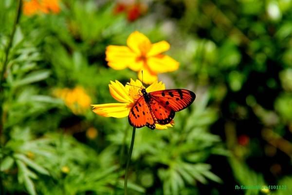 Si mê mùa bướm bay rợp trời ở Vườn Quốc...