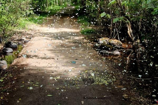 Những khu resort bên ngoài bìa rừng Cát Tiên cũng thu hút bướm không kém. Nếu có dịp lưu trú lại đây, bạn đừng bỏ qua giây phút được hòa mình vào thiên nhiên như thế này.