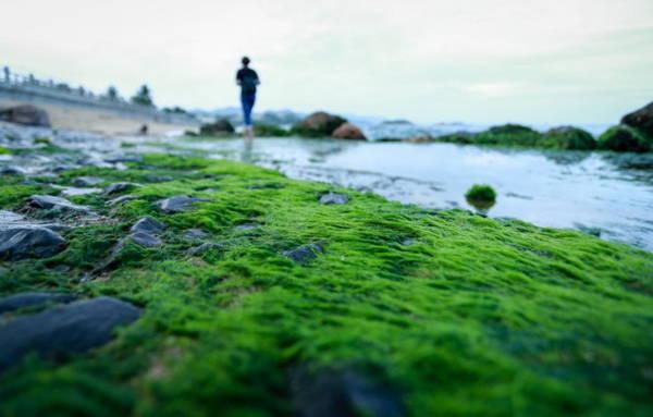 Nhiều nhất là thứ rêu xanh non, nhiều sợi mềm mại đổ rạp trên mặt đá - Ảnh: Tiến Thành