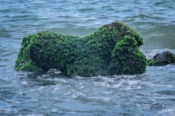 Nhìn vào tảng đá đầy rêu này, bạn có thể tượng tượng ra hình con heo hay con ngựa? - Ảnh: Thanh Trúc