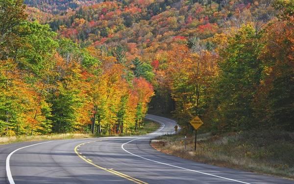 Đường cao tốc Kancamagus, New Hampshire: Vào mùa thu, tuyến đường Kancamagus dài gần 60 km trở nên lộng lẫy khi các vạt cây chuyển màu. Du khách tới đây vào tháng 10 sẽ được chiêm ngưỡng màu sắc rực rỡ của những cây phong, cây trăn và bạch dương. Vào mùa xuân, các thảm hoa vàng và cỏ chân ngỗng sinh sôi khắp nơi, tạo khung cảnh lãng mạn. Ảnh: Travelandleisure.
