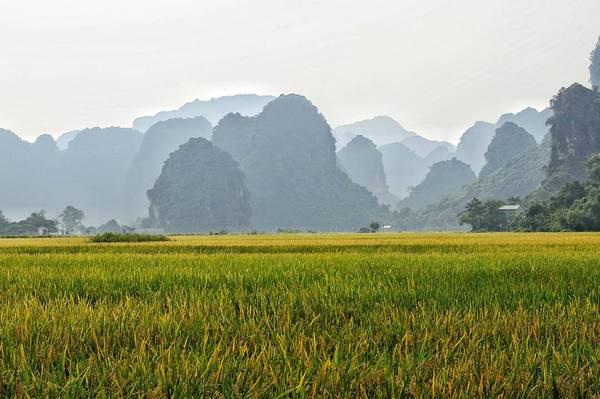Dưới những dãy núi đá vôi là cánh đồng lúa trải dài bất tận. Ảnh: Mathias Lasoen