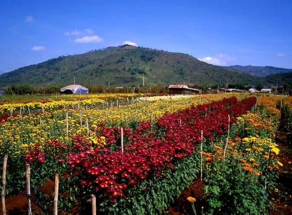 """Du khách cũng khó lòng rời khỏi nơi này khi bước chân bị níu giữ bởi hương thơm quyến rũ của """"vương quốc"""" hoa. Ảnh: Lan Anh"""