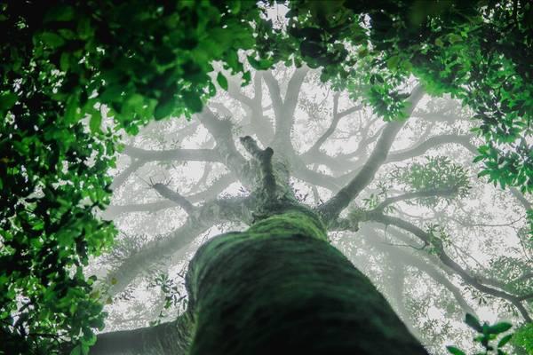 Trong rừng nguyên sinh, không khó để tìm thấy những cây cổ thụ vài người ôm không xuể. Vì quanh năm được mây mù bao phủ, độ ẩm trong rừng rất cao. Rêu mọc hầu như từ gốc đến ngọn cây, tạo vẻ đẹp huyền ảo, thần tiên.
