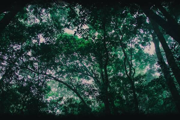 Nghỉ ngơi, tản bộ dưới những tán cây rợp mát làm bạn có cảm giác vô cùng thư thái, dễ chịu. Mọi ồn ào của cuộc sống như tan biến cùng những gợn mây là là bên sườn núi.