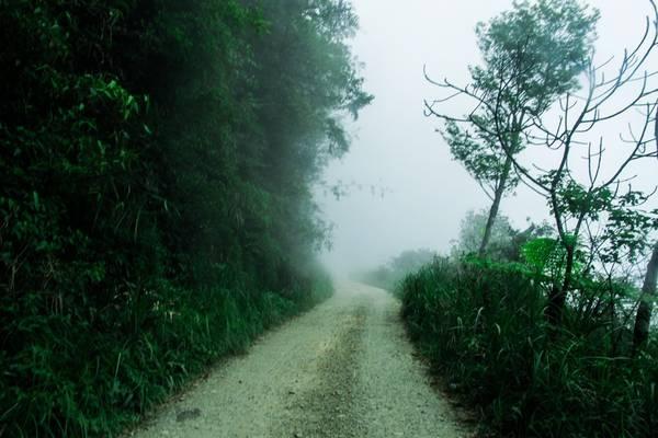 Đường vào rừng khá khó đi. Tuy nhiên khung cảnh vô cùng hoang sơ, yên tĩnh, quanh năm mây mù bao phủ.