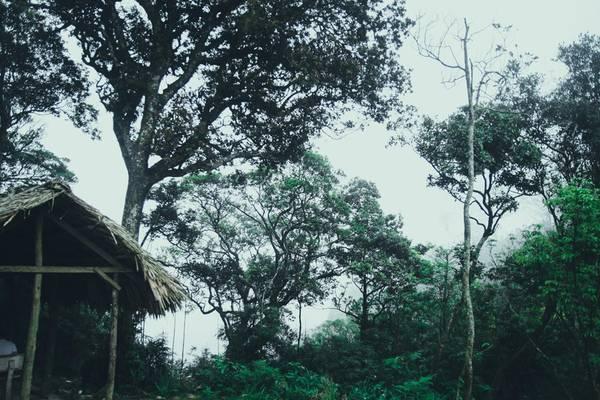 Điều đầu tiên bạn có thể cảm nhận được khi bước tới trạm dừng nghỉ là không khí vô cùng mát mẻ, mây mù bồng bềnh. Xung quanh có rất nhiều cây cổ thụ xanh mát quanh năm. Không gian tĩnh mịch, rất phù hợp cho việc nghỉ ngơi, thư thái và khám phá khu rừng.