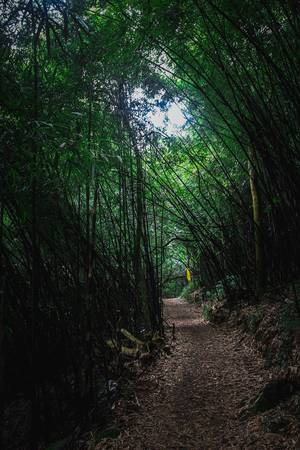 Từ đây có rất nhiều lối mòn tỏa đi để khám phá các địa danh trong khu rừng. Có thể là con đường dài xuyên qua rừng trúc bí ẩn...