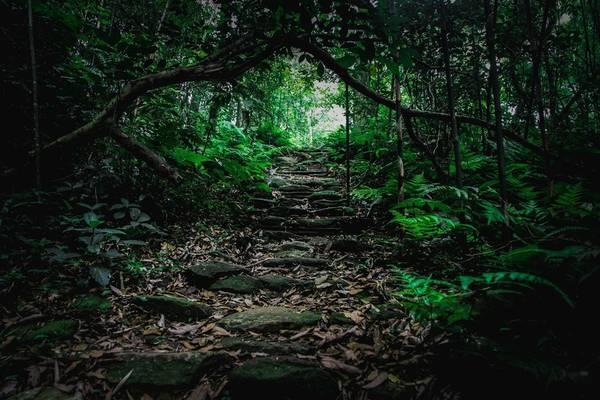 Hoặc những con đường ven suối phủ đều rêu phong và dây leo khiến bạn ngỡ như đang lạc vào thế giới cổ tích.