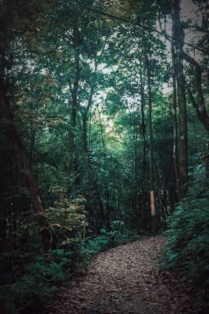 Những con đường không quá khó đi, lý tưởng cho những người yêu thích trekking và leo núi.