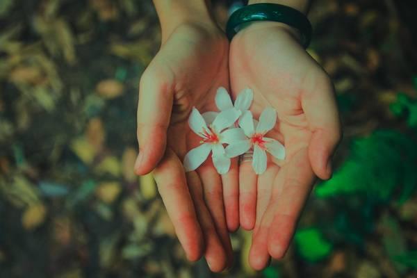 Rừng Tam Đảo có rất nhiều loài hoa nở quanh năm. Nếu đi đúng vào mùa phong lan nở, bạn sẽ vô cùng bất ngờ bởi vẻ đẹp của rừng Phong Lan.
