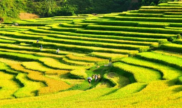 """Vào mùa lúa, Pù Luông """"khoác"""" lên mình màu áo xanh mướt khiến nhiều người mong ngóng lên đường để ngắm nhìn vẻ đẹp bình yên giữa núi rừng.Ảnh: FB PuLuong Retreat"""