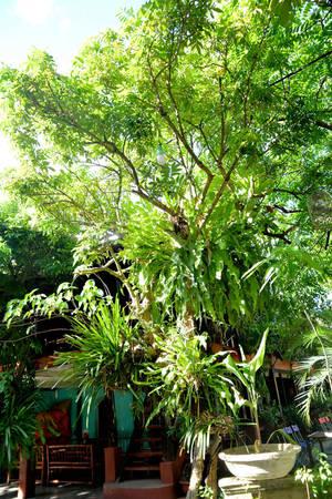 Rất nhiều phong lan - Ảnh: Phạm Tô Chiêm