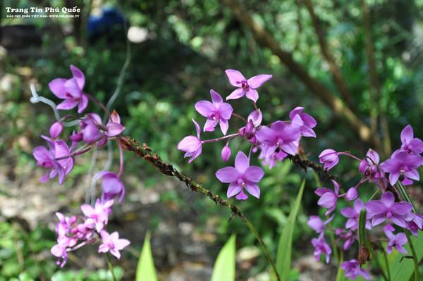 Động thực vật phong phú trong vườn quốc gia. Ảnh: phuquoctv