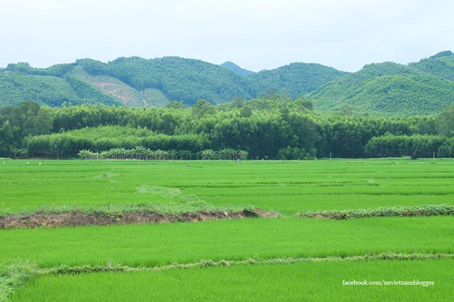 Núi tiếp non, ruộng tiếp đồng… là hình ảnh quen thuộc khi bạn đến với vùng quê Hoài Nhơn.