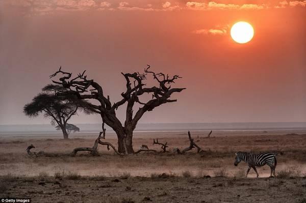 Ở Kenya, mặt trời lúc hoàng hôn dường như to hơn những nơi khác, tạo ánh sáng huyền ảo trên đồng cỏ rộng lớn.