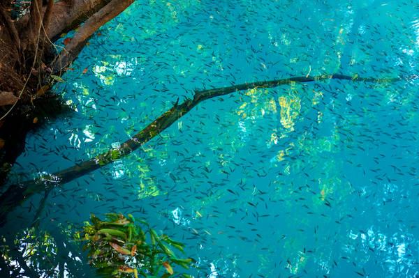 Dòng nước xanh tuyệt đẹp, nhìn rõ cả cá đang bơi lội. Ảnh: commons.wikimedia.org