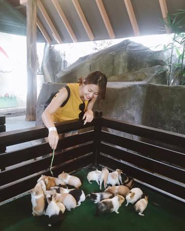 Sunway Lagoon là công viên giải trí hấp dẫn ở Petaling Jaya, Malaysia, chính thức mở cửa vào tháng 4 năm 1993. Đến với Sunway Lagoon, khách du lịch sẽ được thám hiểm thế giới hoang dã Châu Phi với Congo Challenge, Cameroon Climb, African Pythons… hay thử cảm giác đứng trên cây cầu bộ cao nhất thế giới và ngắm nhìn toàn cảnh công viên.