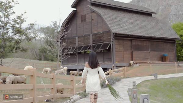 Đường dẫn vào nông trại cừu vô cùng nên thơ.