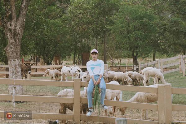 Và rồi hóa thành cậu bé chăn cừu ở một nông trại xa xôi nào đó.