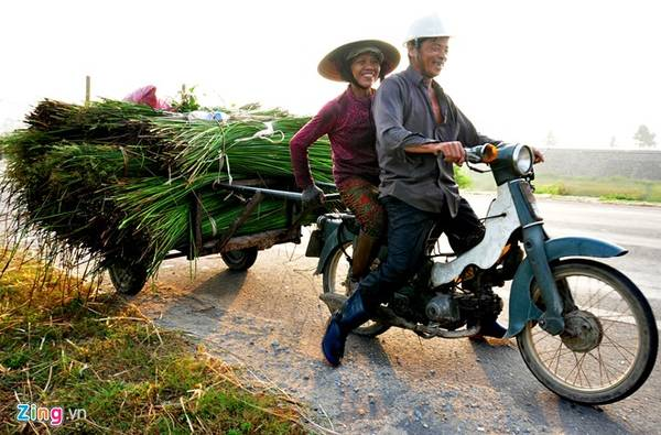 Kết thúc công việc nhọc nhằn buổi sớm, đôi vợ chồng chạy xe máy kéo, chở nguyên liệu cói về nhà.
