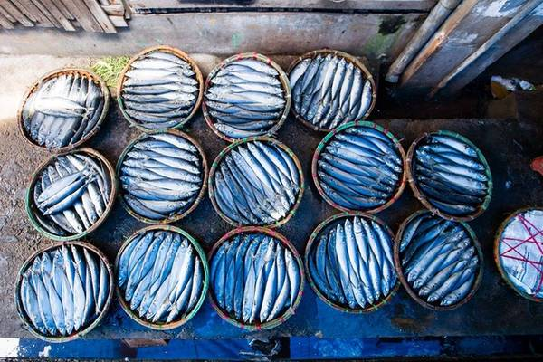 Nghề hấp cá ra đời từ cách đây hơn nửa thế kỷ tại chợ cá nằm ven bến Hàm Tử. Các thuyền chở cá tươi từ biển về sẽ được các lò hấp thu mua, thường là các loại như: cá mực, cá nục, cá cơm, cá sọc dưa, cá ngừ…