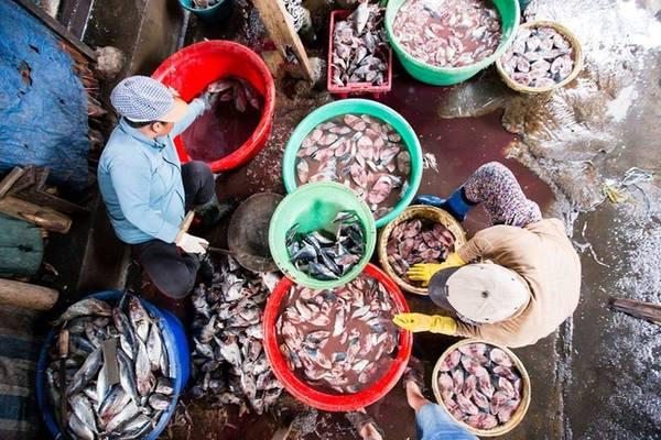 Sau khi mua về, những nhân công ở đây làm sạch cá qua các công đoạn như: đánh vảy, mổ ruột, cắt lát và xếp ngăn nắp vào các rổ tre để chờ cho vào lò hấp. Vì phải làm thật nhanh với số lượng lớn nên người thợ chỉ sơ sểnh một chút là có thể bị đứt tay.