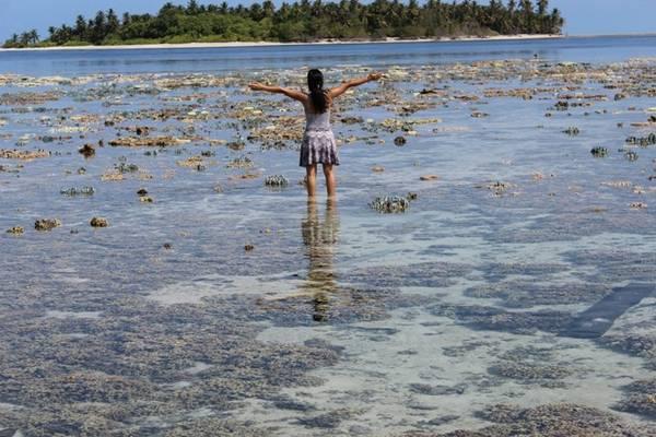 """Nếu bạn từng băn khoăn về """"coral garden"""" khi tìm hiểu về Maldives thì đây chính là hình ảnh của """"vườn san hô"""". Bạn không cần phải đi đâu xa để tìm san hô, vì khi thủy triều xuống, san hô sẽ tự tìm tới bạn."""