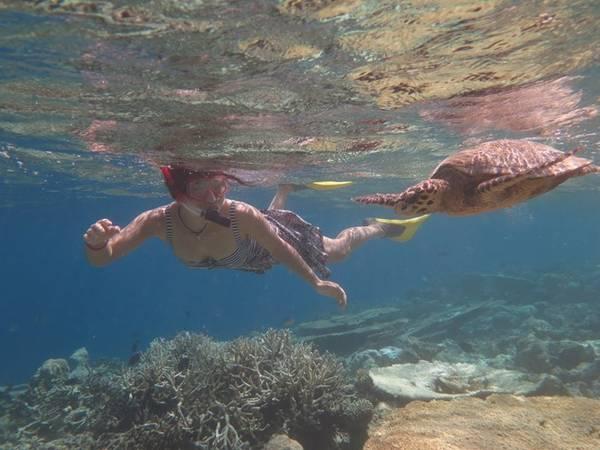 Trải nghiệm tuyệt vời: bơi cùng rùa biển ngắm san hô.