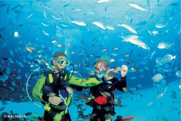 Ngoài ra, Malta còn có những khu vực lặn biển thuộc hàng tuyệt nhất thế giới. Du khách có nhiều lựa chọn, từ lặn ở khu biển nội địa, hang động, tới ngắm các xác tàu đắm, rạn san hô rực rỡ... Đặc biệt là nước ở đây khá ấm áp, khiến việc lặn biển thoải mái hơn nhiều. Ảnh: Maltaqua.