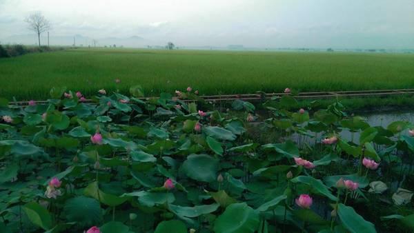tu-phuong-that-dao-ivivu-15