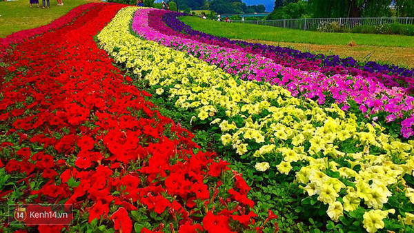 Yamagata là xứ sở của những cánh đồng hoa